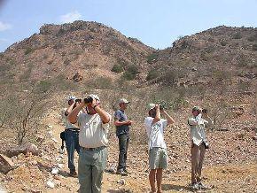 El Santuario Histórico de Pómac es uno de los lugares ideales para la observación de aves. En la zona viven varias especies endémicas.