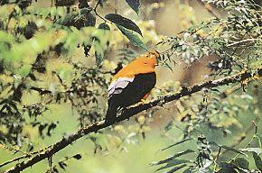 El parque nacional del Manu es una de las áreas con mayor biodiversidad en el mundo.