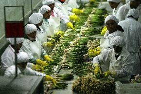 La agroindustria es una de las actividades de la región Lambayeque que tiene mayor demanda en el exterior.