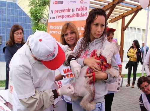 Vacunación canina.