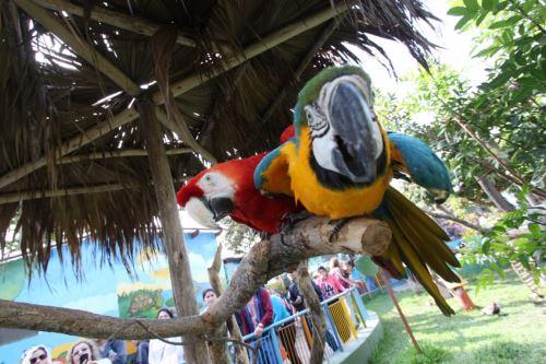 Guacamayos y loros deleitan al público que visita parque. Foto: Difusión