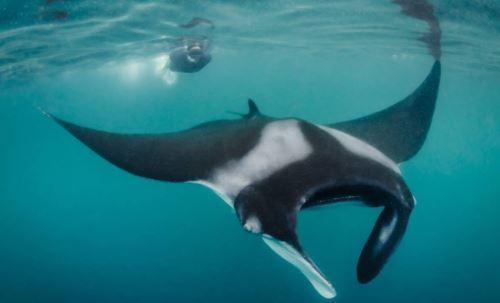 Una gran diversidad de especies viven en el mar del norte.