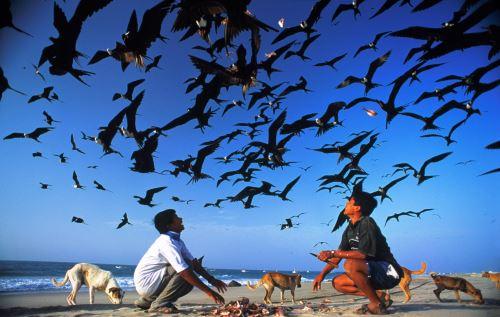 Un gran variedad de especies de aves marinas viven en la zona.