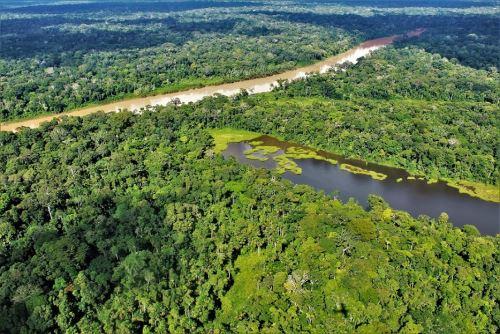 Los bosques húmedos amazónicos representan el 94% del total de bosques en el Perú.