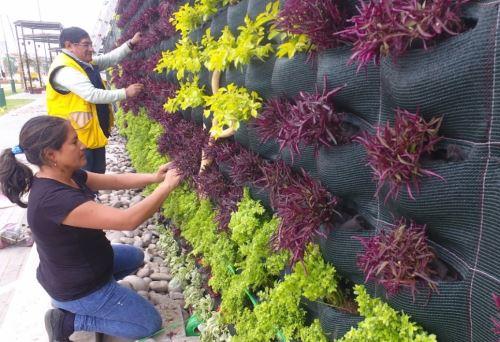 Vistosos Jardines Verticales Adornan Parque De La Muralla