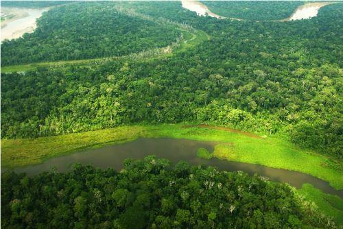 Presentan estudio sobre cobertura y pérdida de bosques húmedos amazónicos.