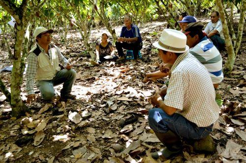 Equipo técnica de Alianza Cacao Perú visitó a familias de diversas zonas del Alto Huallaga.