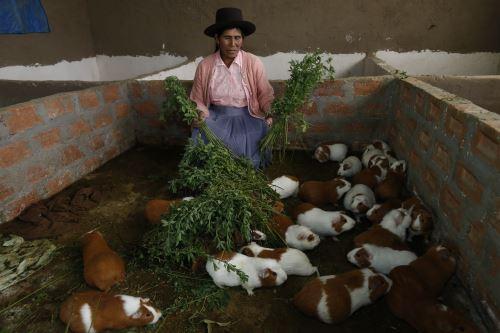 Programas de desarrollo productivo financian emprendimientos rurales.