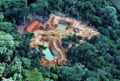 Se unirán esfuerzos para combatir la tala ilegal.