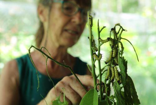 Gudrun Sperrer se dedica desde hace 20 años al cuidado de mariposas en Loreto.