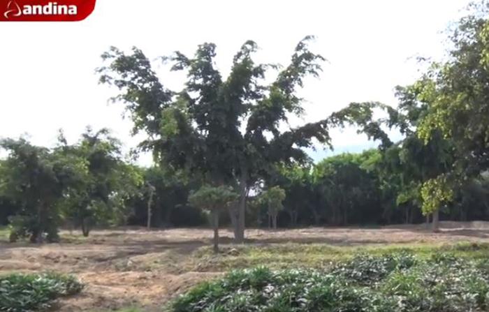 Albergue de árboles es pulmón ecológico para Lima