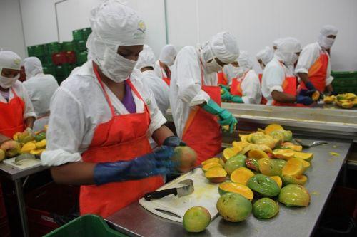 Exportación de mangos peruanos. Foto: Adex