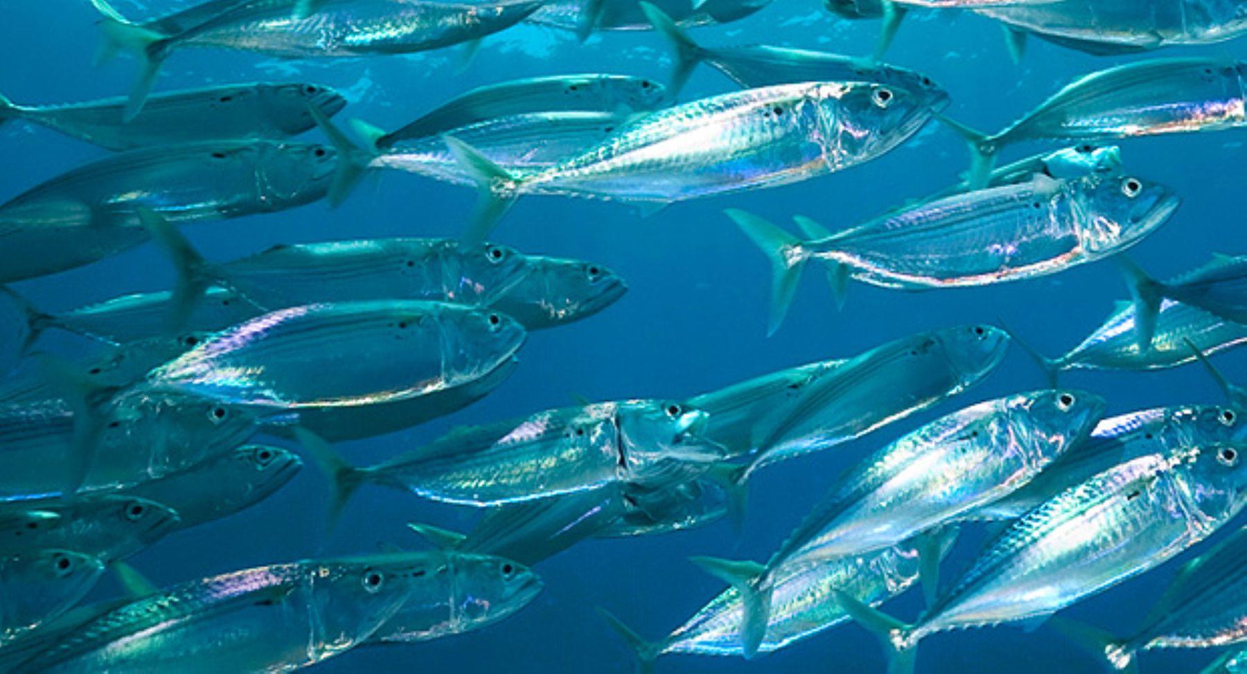 Acuario de mistura mostrar en vivo y virtualmente peces for Variedad de peces