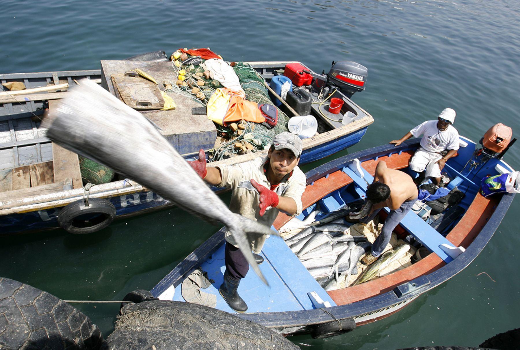 Abundancia de peces de consumo humano beneficia a for Cria de peces para consumo humano