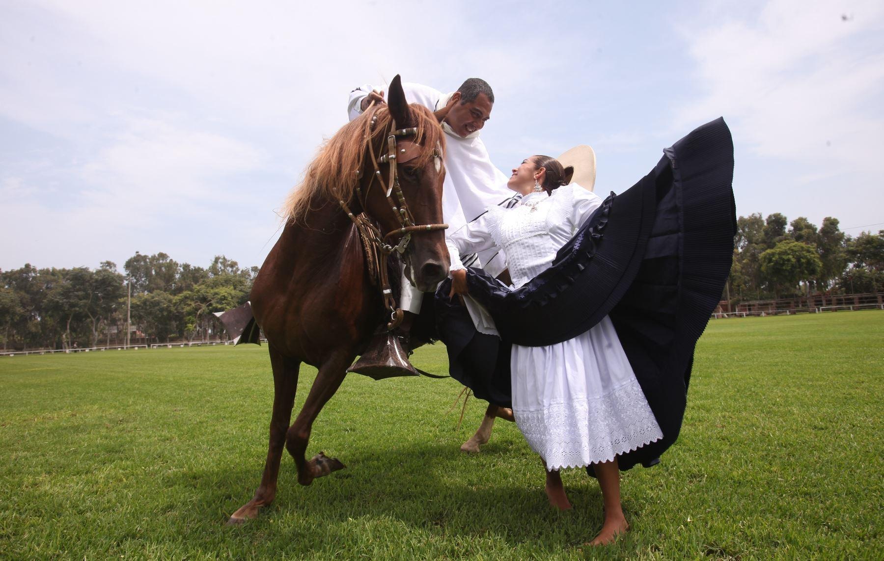 Caballos de Paso Peruano en Ecuador Caballos Peruanos de Paso