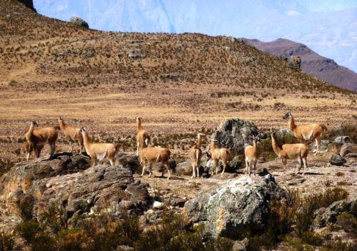 Áreas Naturales de La Libertad integrarían destacado circuito turístico Ruta Moche. Foto: ANDINA/Difusión.