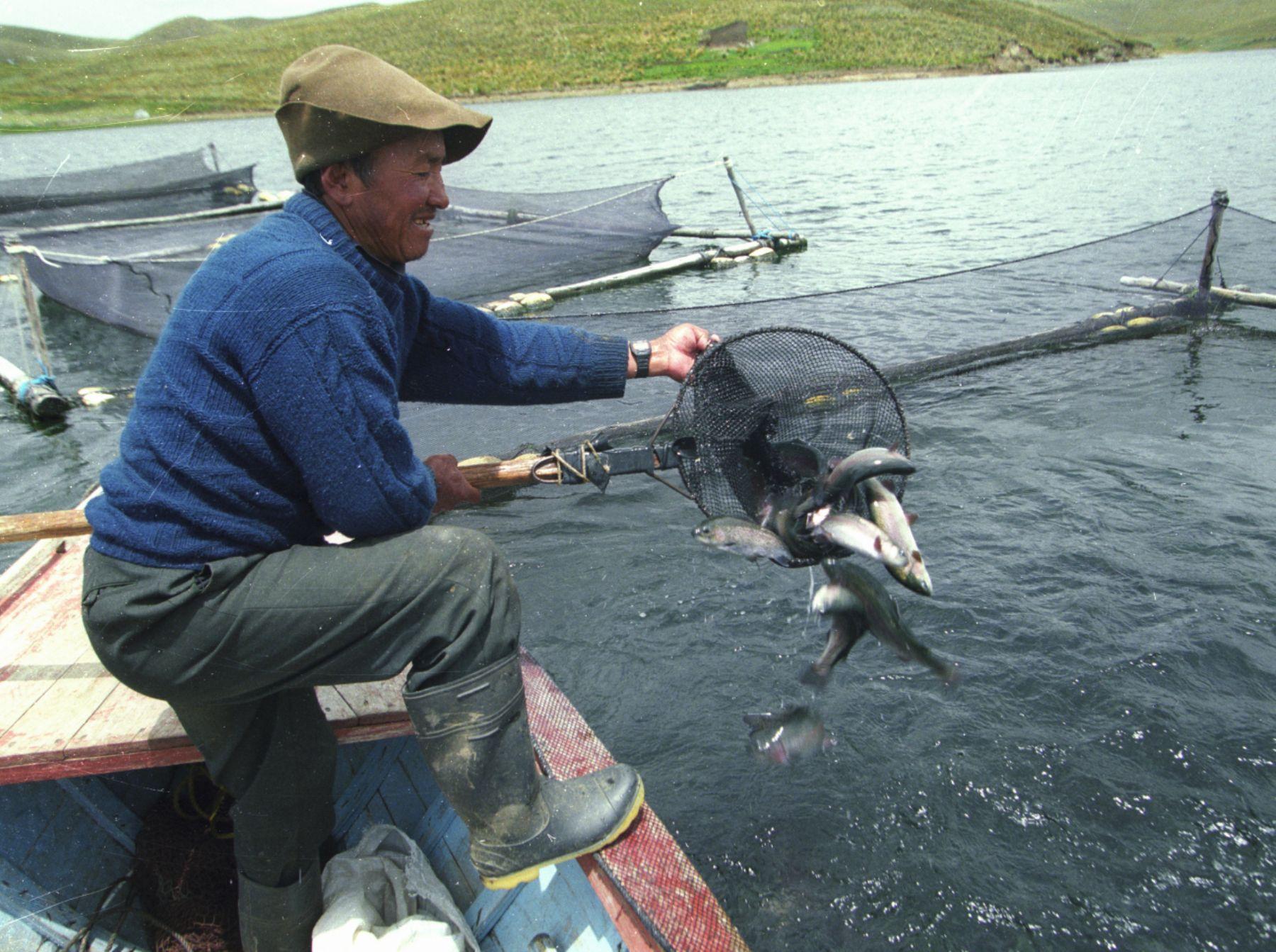 Puno apunta a convertirse en el primer productor de trucha for Criadero de peces