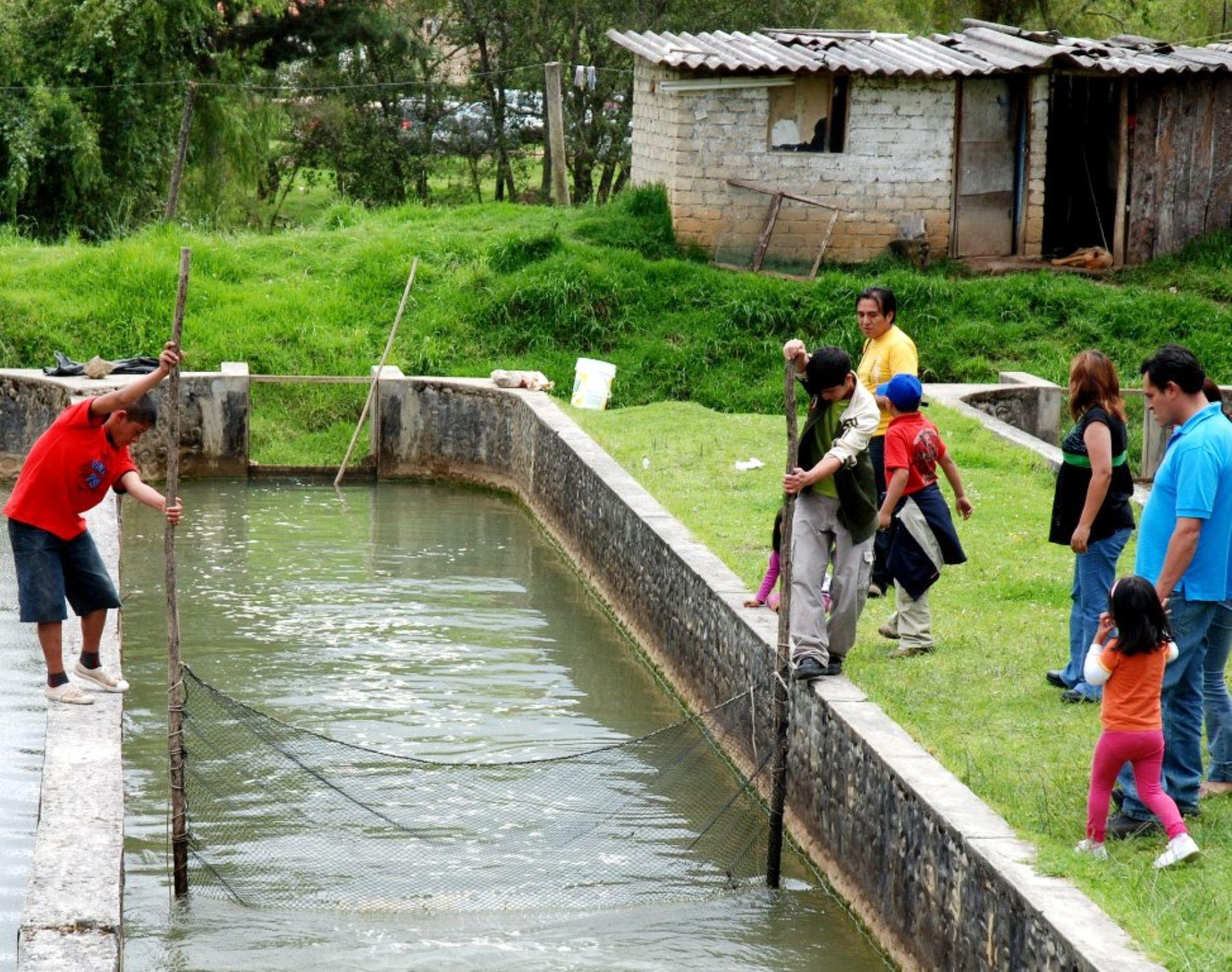 Cosecha de acuicultura crece en per y producci n podr a for Crianza de tilapia en estanques