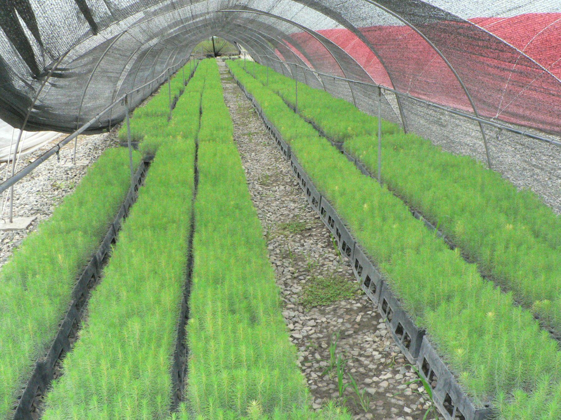 Agrorural relanza viveros de alta tecnolog a con fines for Construccion de viveros