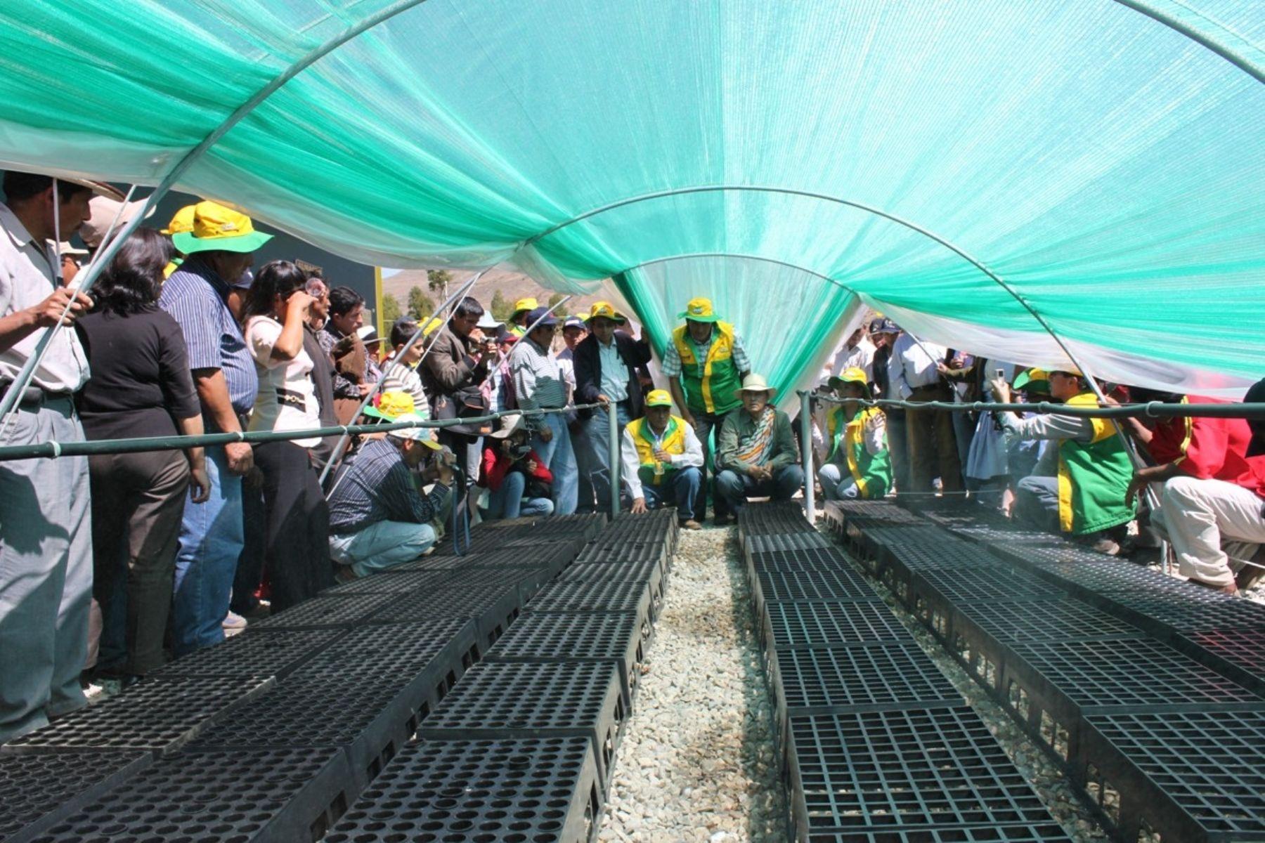 Inauguran segundo vivero forestal de alta tecnolog a en el for Viveros en lima