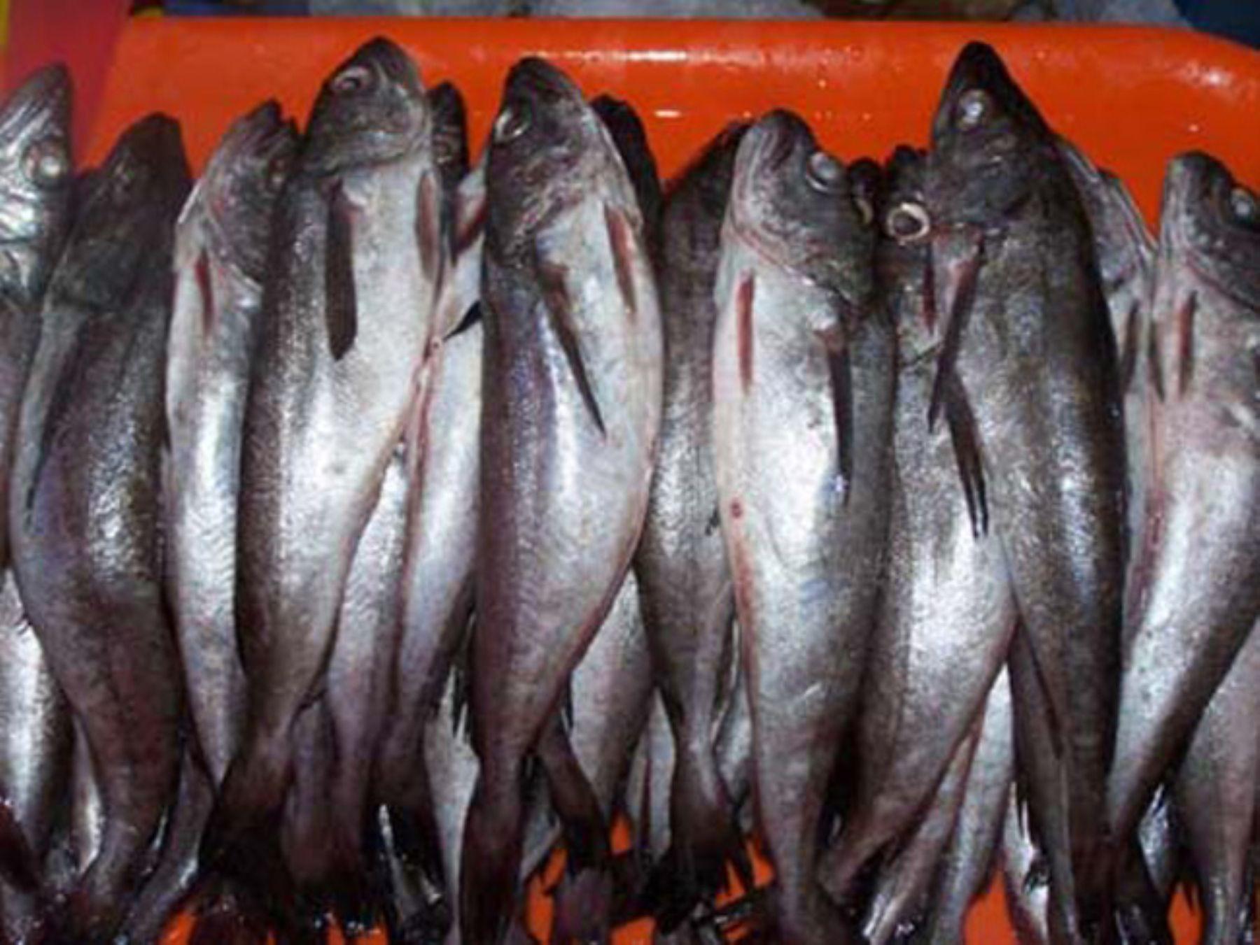 Los informes a la pesca en mr