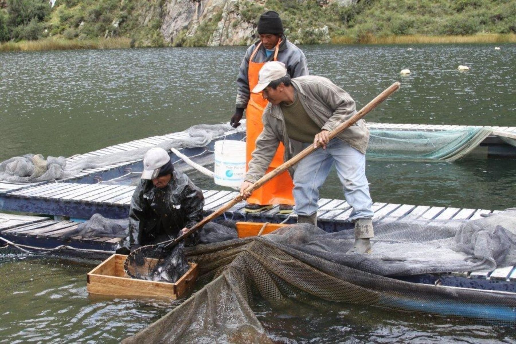 Comunidad campesina de yauyos apunta a producir 70 for Jaulas flotantes para piscicultura