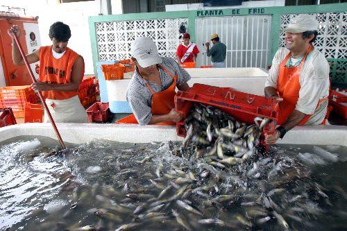 Sector pesquero. Foto: ANDINA/Archivo.