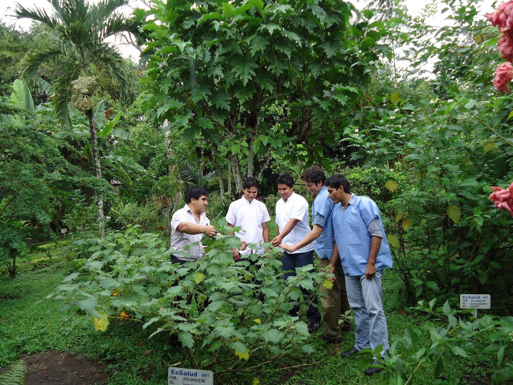 Investigadores loretanos analizan propiedades de plantas de la Selva
