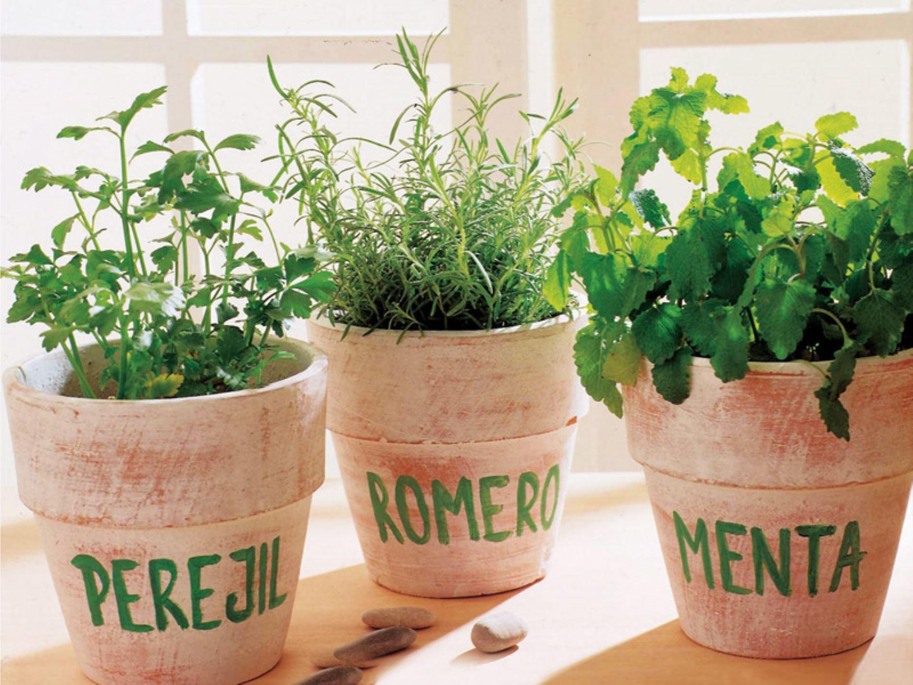Aconsejan uso de plantas arom ticas como repelente natural for Asociacion de plantas aromaticas