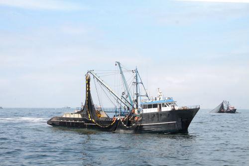 Produce anuncia pesca experimental para la anchoveta de consumo humano directo. Foto: Produce.