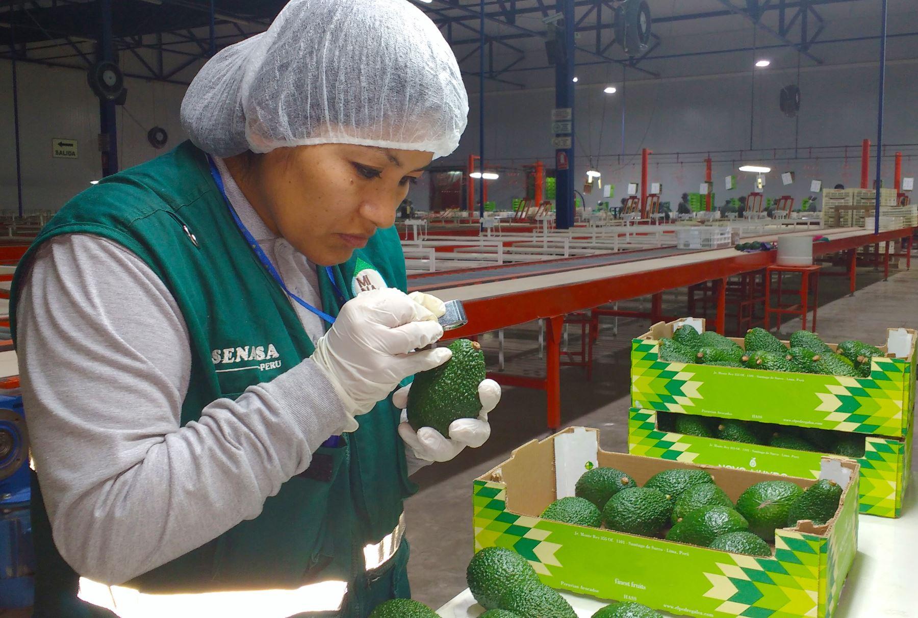 Resultado de imagen para Perú Es El Tercer Mayor Exportador De Palta En El Mundo