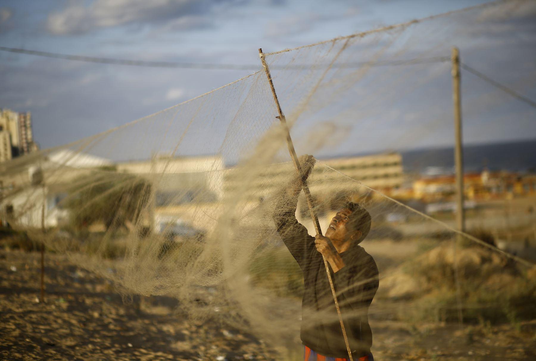 Sager Al-Qomi recoge una codorniz de su red en una playa en la ciudad de Gaza. Foto: AFP
