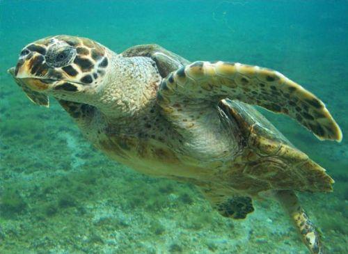 En la zona se pueden avistar tortugas marinas.